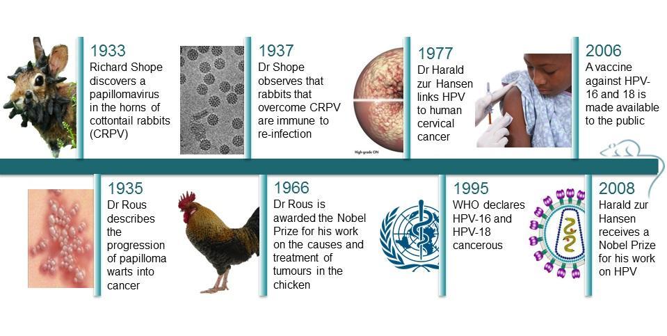 chicken papilloma disease)