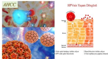 AHCC Nedir? HPV tedavisi ile ilgisi var mı? Gerçekten tedavi ediyor mu? Yoksa o paraları boşa mı harcıyorsunuz?